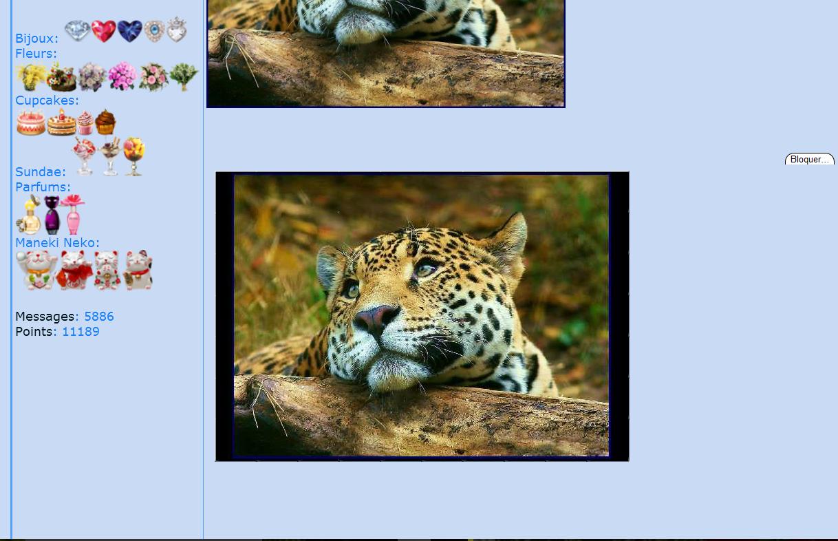 Puzzle #34 - Le léopard 151121104659250980
