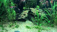 Je pensais en avoir fini avec les algues... Mini_151220114055441907