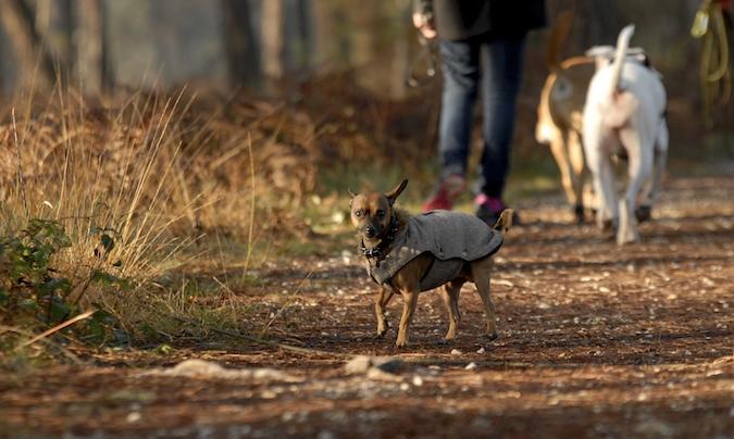 Rencontre canine du forum en région bordelaise (33) - Page 7 151222065908202718