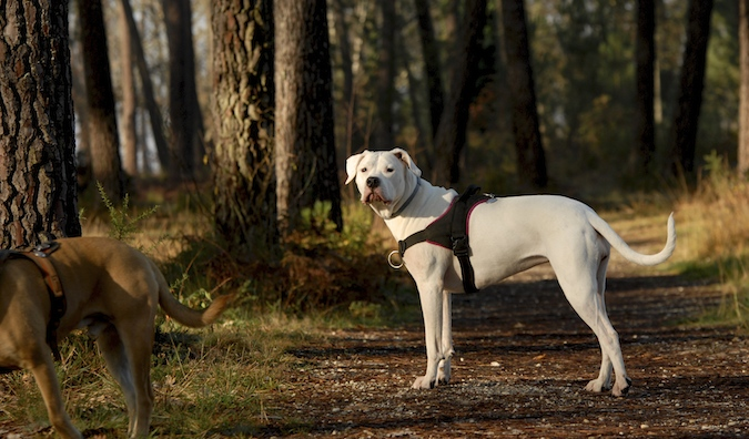 Rencontre canine du forum en région bordelaise (33) - Page 7 151222065908767297
