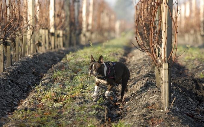 Rencontre canine du forum en région bordelaise (33) - Page 7 151222065909709433