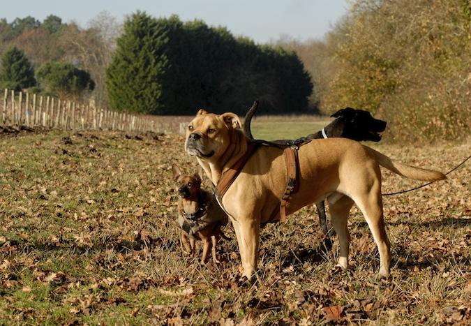 Rencontre canine du forum en région bordelaise (33) - Page 7 15122206591140248