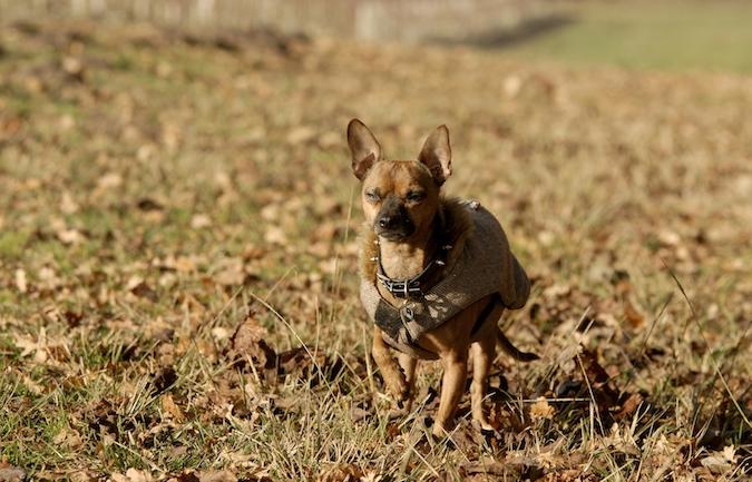 Rencontre canine du forum en région bordelaise (33) - Page 7 151222065913153969