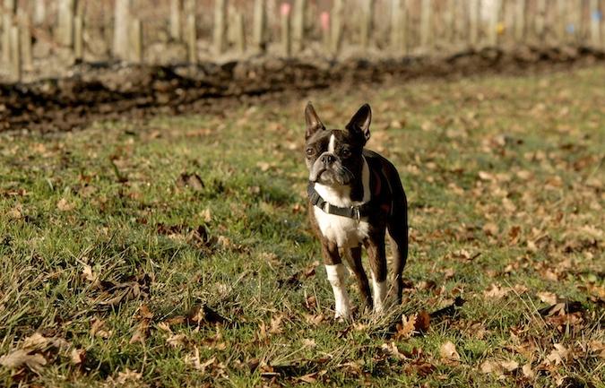 Rencontre canine du forum en région bordelaise (33) - Page 7 151222065913414496