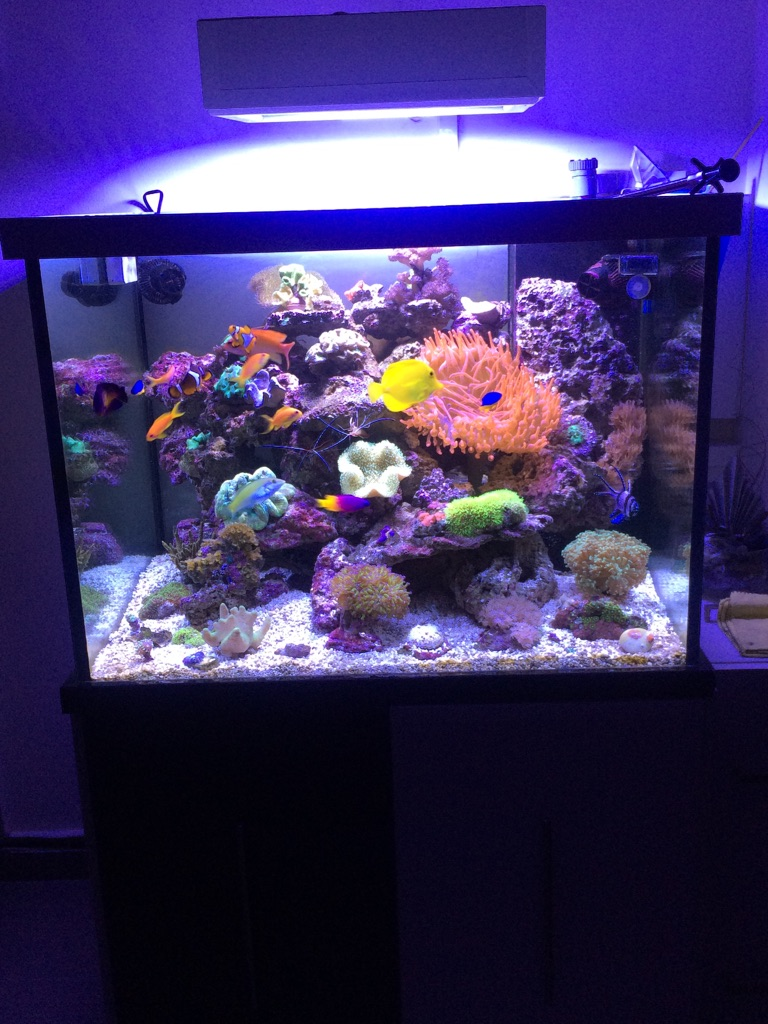 Photo de mon aquarium  151224060334223566
