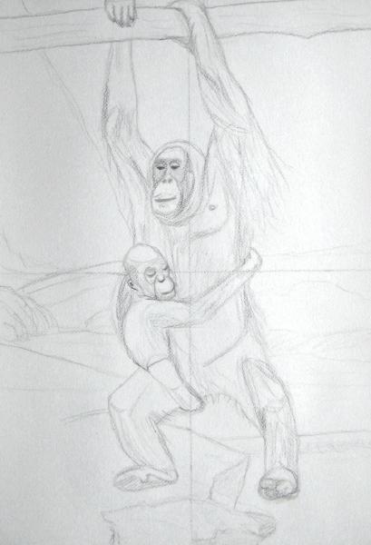Orangs-outangs (1) dessin_1