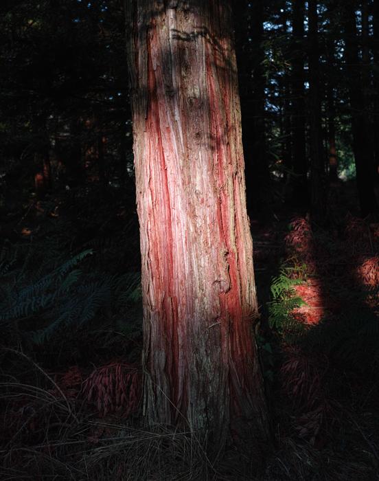 les séquoias  160210073211532586