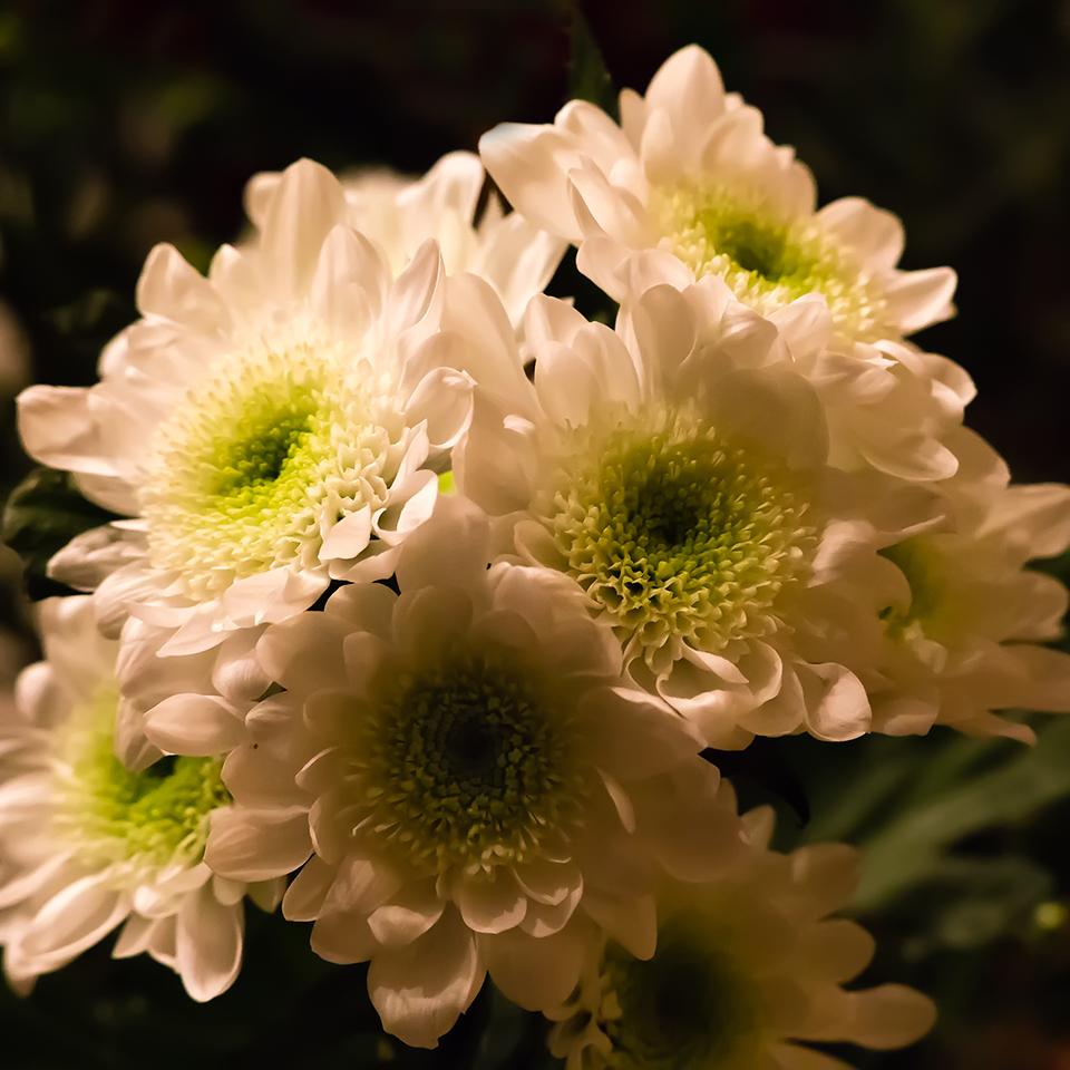 Fleurs 160215092243715361