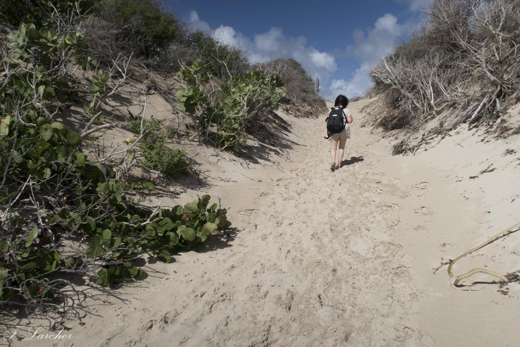 Ile de St Barth (Antilles) 160219031545576292