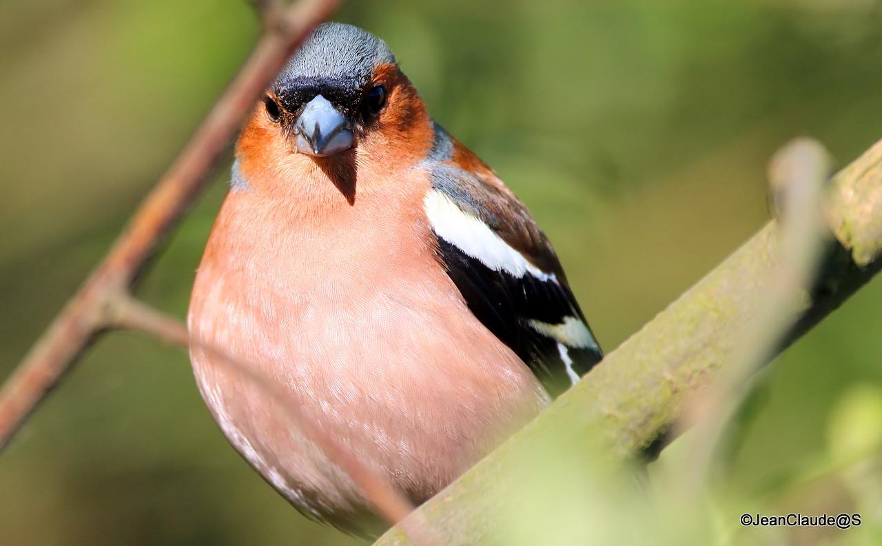 Ballade Ornithologique 160504060159465391