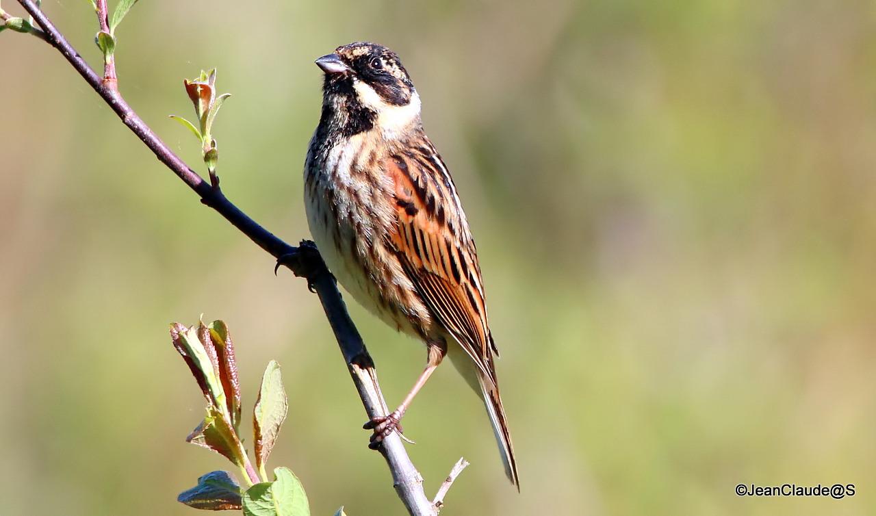 Ballade Ornithologique 160504060206521194