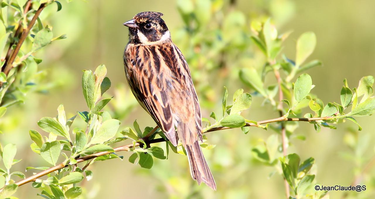 Ballade Ornithologique 16050406020862492