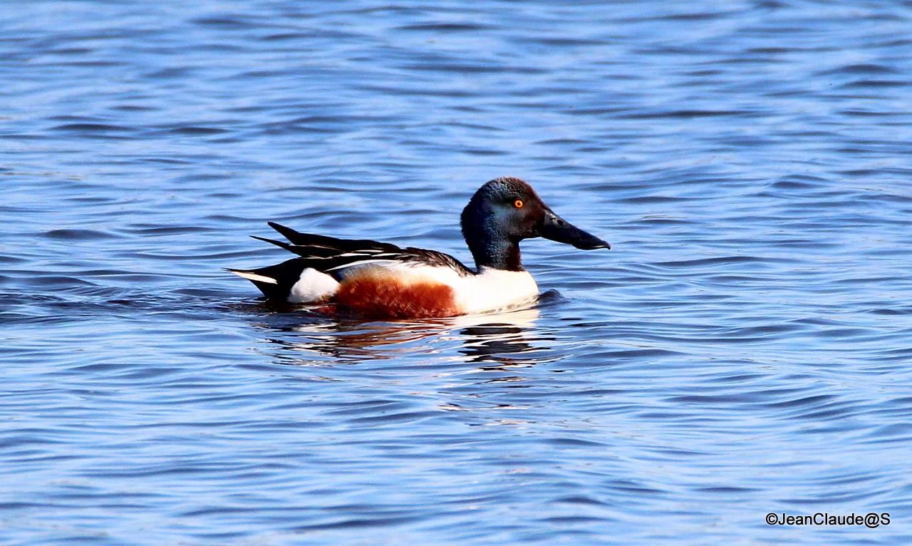 Ballade Ornithologique 16050406021585920