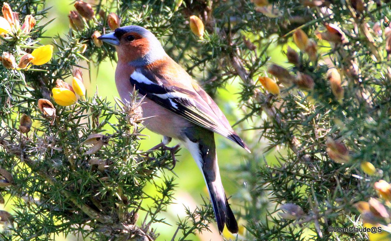 Ballade Ornithologique 160504060219822444