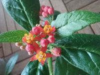 joli mois de mai, le jardin fait à son gré - Page 5 Mini_160531023910958807