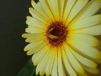 Farces et clowneries de plantes - les plantes font leur rigolote - Page 2 Mini_160531035037220757
