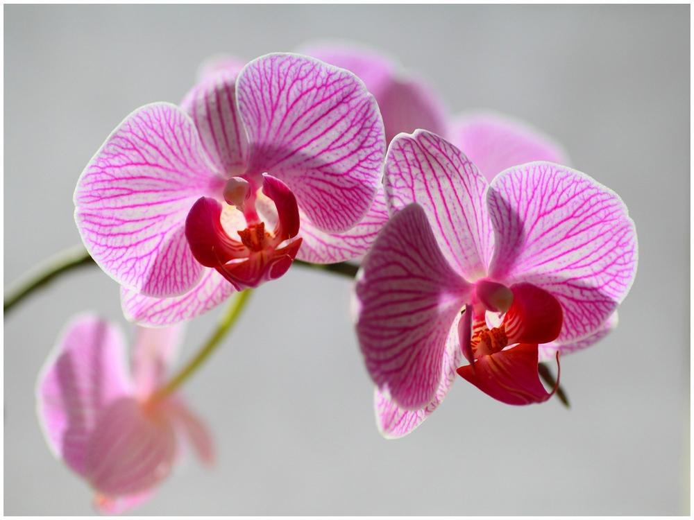 Orchidée  160612112458690233