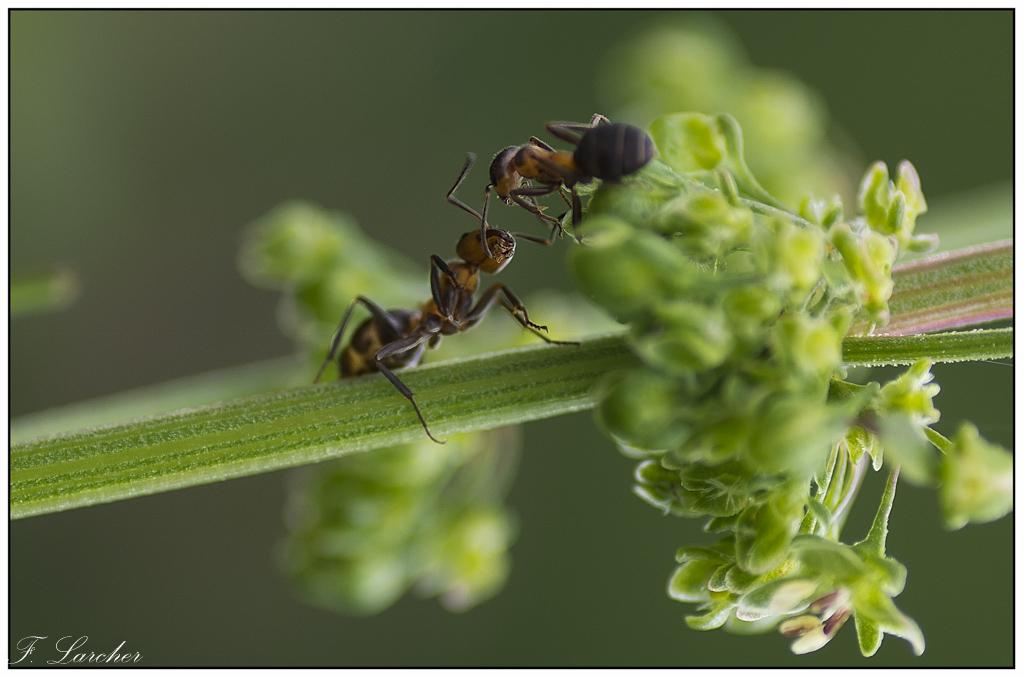 Le peuple des fourmis 160618081716305140