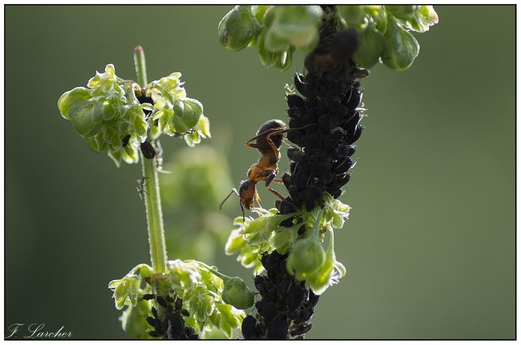 Le peuple des fourmis 160618081716939757