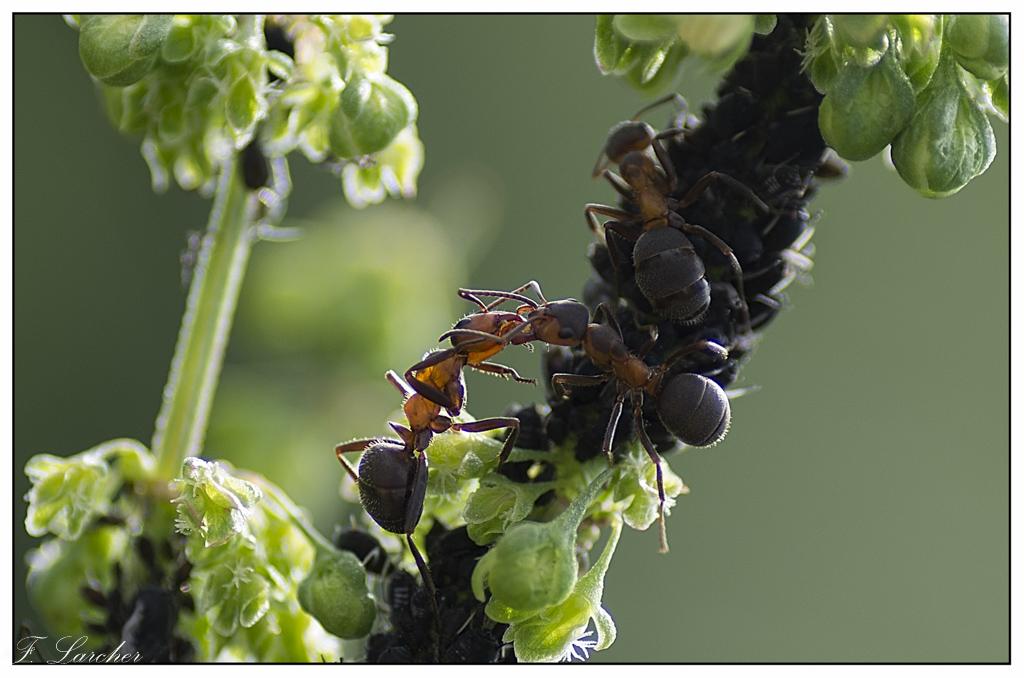Le peuple des fourmis 160618081726422708