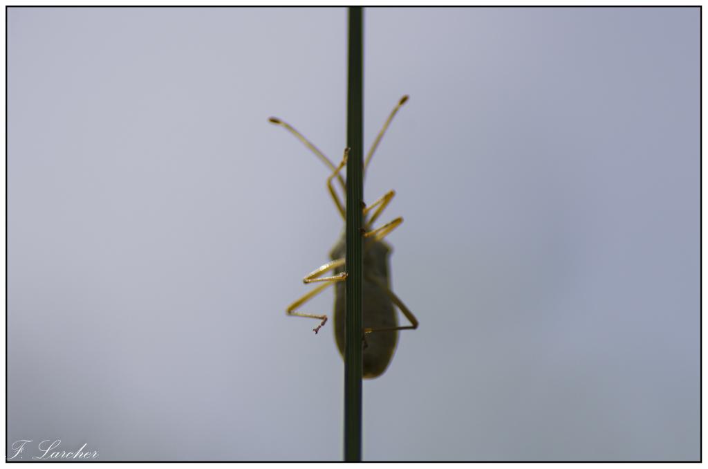 Le peuple des fourmis 160619113116702031