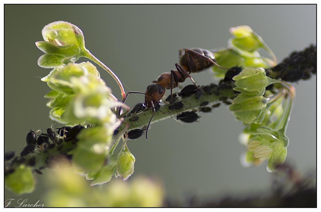 Le peuple des fourmis 160619113122470880