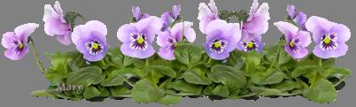 fleur pensees