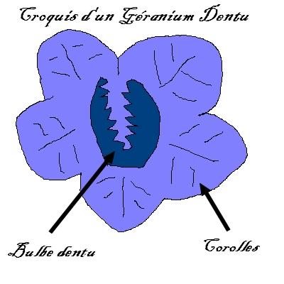 [11 Septembre 1997] Le Géranium Dentu 160822113656759842