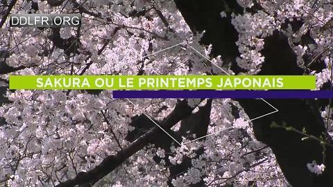 Sakura ou le printemps japonais