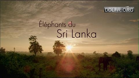 Eléphants du Sri Lanka