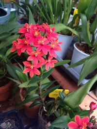 epidendrum !? Mini_160912110817890869