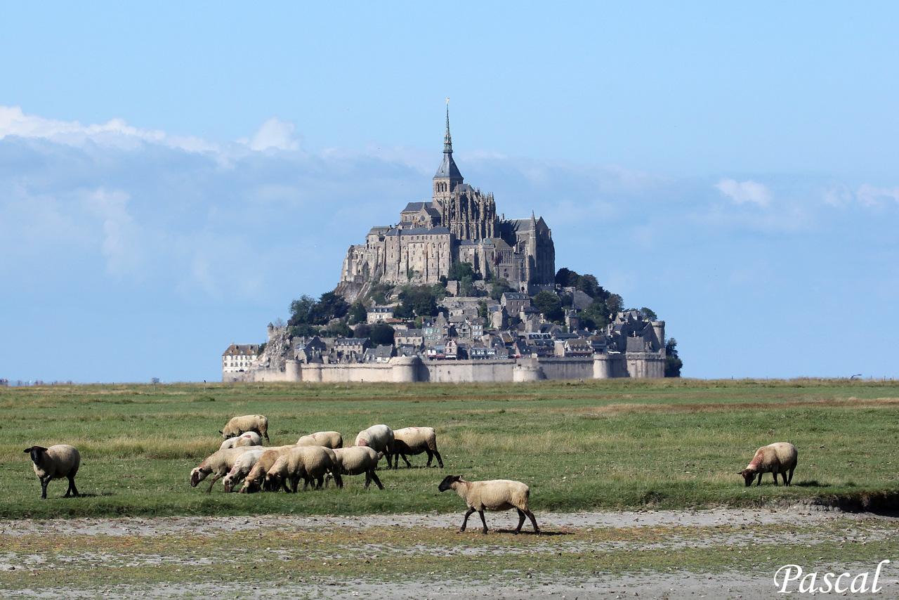 Les herbus de la baie du Mont Saint Michel 161002065456292816