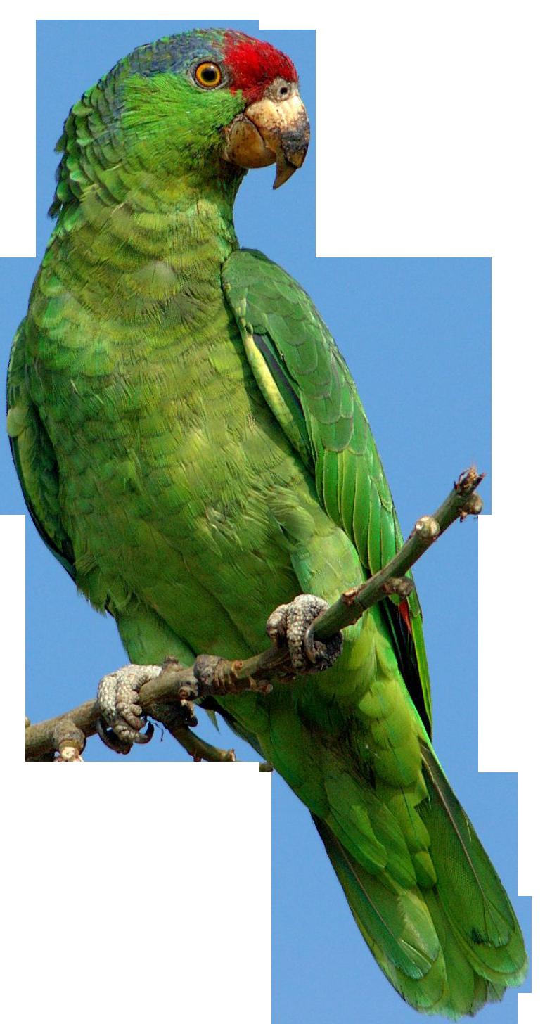 Photos d'oiseaux sur fond blanc 161026094520460987