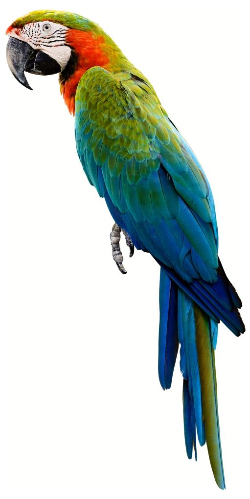 Photos d'oiseaux sur fond blanc 161026101900679939