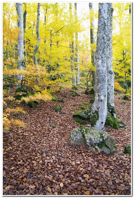 Couleurs d'automne  encore... 161030062123330015