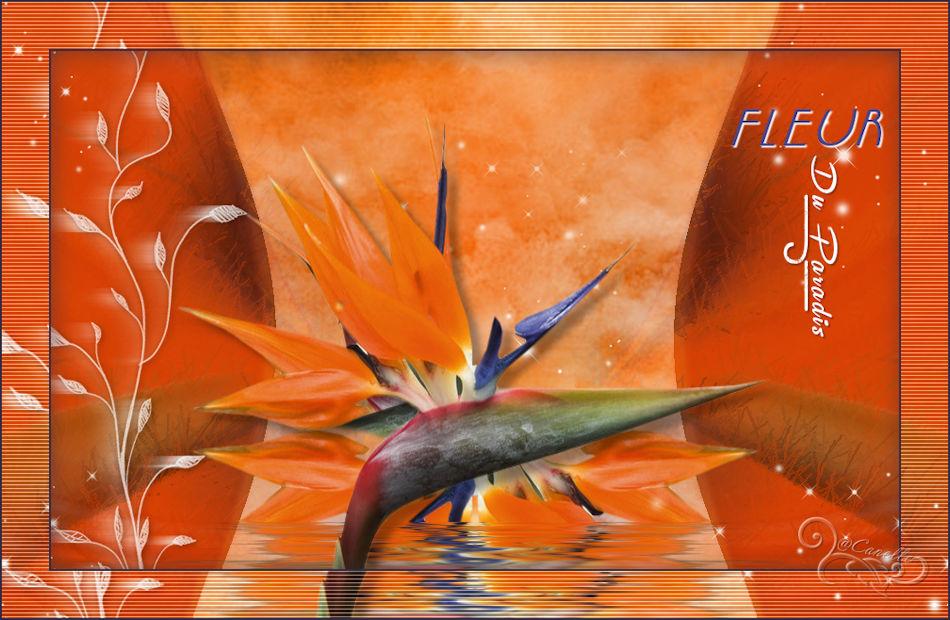 Fleur du Paradis (Psp) 161122064545289016