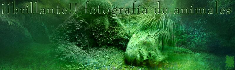 ¡¡brillante!! fotografía de animales