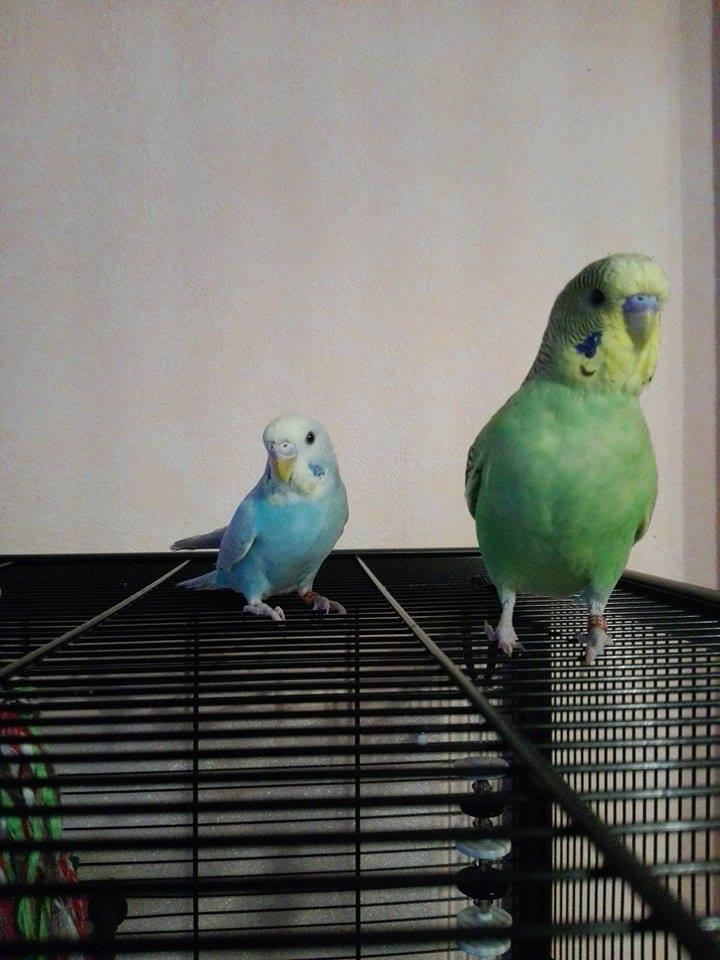 Voici Ayko & Ayla 170108060523806813
