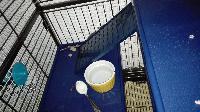 Cage, grillage, accessoires, désespoir et autres mots clés  Mini_170110012035996387