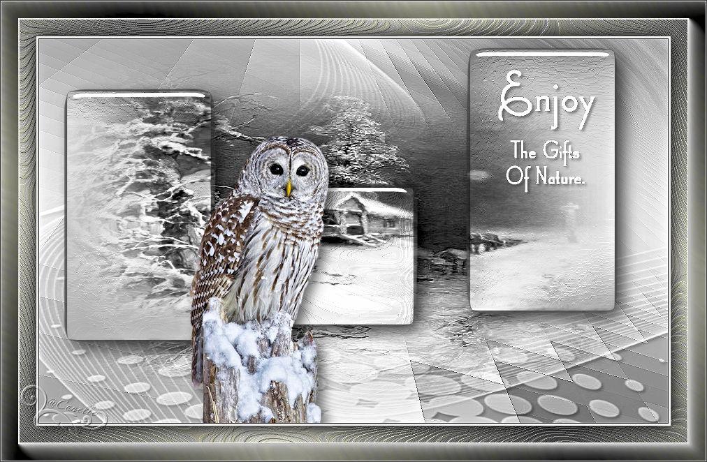Blue Bird (PSP) 170120042438246098