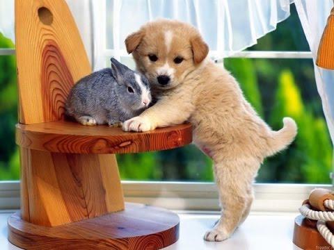 petit chiot et lapin mimis