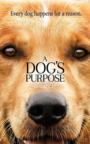 Był Sobie Pies / A Dogs Purpose (2017) PL.SUBBED.480p.BRRip.XViD.AC3-MORS/ Napisy PL