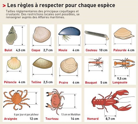 peche-pied-crustaces