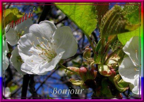 MERCREDI 05 AVRIL 2017 Sainte IRENE 170405121910900792