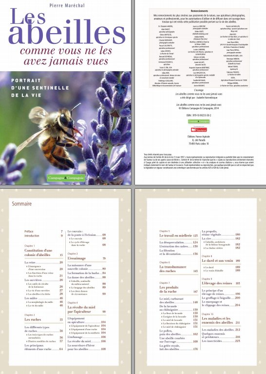 TELECHARGER MAGAZINE Les abeilles comme vous ne les avez jamais vues