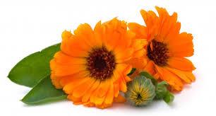 Fleur - Souci