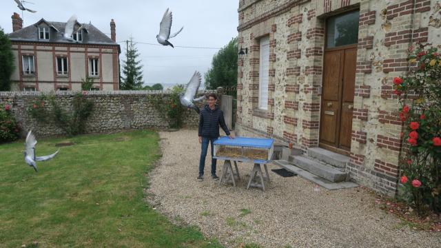 honfleur-les-pigeons-voyageurs-font-leur-tour-de-france