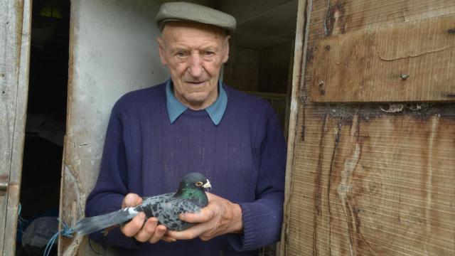 begard-lucien-le-minoux-fait-voler-ses-pigeons-en-france